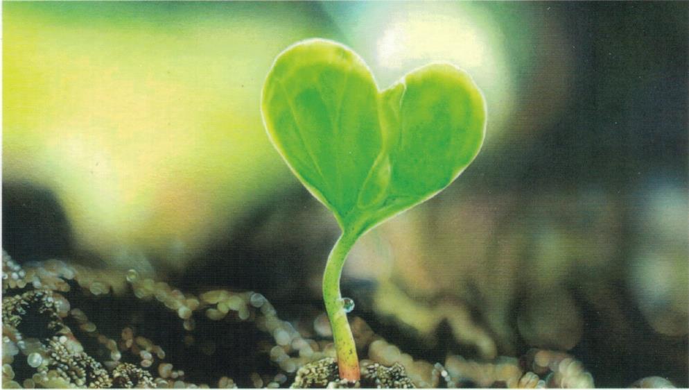 Ein Blatt in Herzform aus einem Keim wachsend, als Ausdruck dafür, dass die psychologische Homöopathie nach Sehgal das Herztück meiner Paxis in Friedrichsdodrf ist.